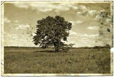 Photographie de vieillissement Images libres de droits