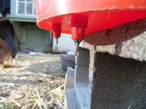 Photographie des mamelons filetés de l'eau de volaille Photos stock