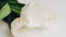 Photographie des tulipes blanches sur la table Foyer peu profond n Images stock