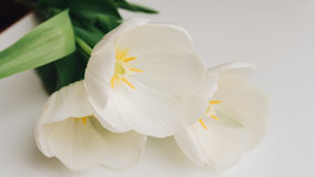 Photographie des tulipes blanches sur la table Foyer peu profond n Image stock