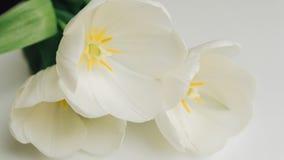 Photographie des tulipes blanches sur la table Foyer peu profond n Photo libre de droits