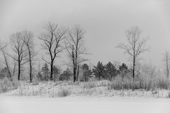 Photographie noire et blanche de forêt Photos libres de droits