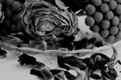 Photographie noire et blanche rose et fleurs de rouge sur le fond noir Photo libre de droits