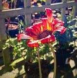Photographie renversante de fleur Images libres de droits