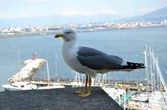 Photographie se reposante de fond d'oiseau et de mer de mouette Photographie stock