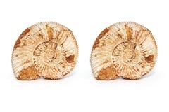 photographie stéréo de Croix-vue de fossile d'ammonite sur le fond blanc photo 3D Photo stock