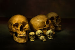 Photographie toujours de la vie avec les crânes humains Images stock