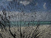Photographie toujours de la vie de corail noir Image libre de droits