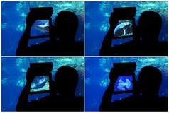 Photographin aquarium. Collage Stock Photo