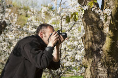Photographing cherry blossoms Stock Photography