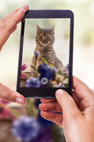 Photographing a cute cat Royalty Free Stock Photo