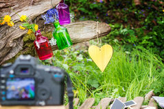 Photographing decoration in the garden Royalty Free Stock Image