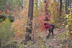 Photographing Fall Foliage. A photographer capturing the colorful fall foliage in an arizona forest Stock Image