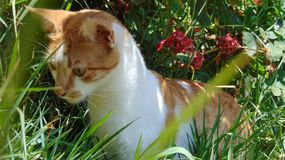Cat-moment specials-life. Photographing the feline observing wildlife Royalty Free Stock Images