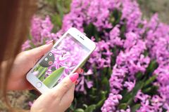 Photographing flowers with smartphone
