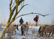 Photographing horses in the snow Stock Photography