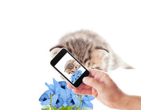 Photographing kitten Royalty Free Stock Photo