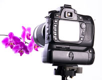 Photographing orchid in photo studio. With full screen review. Focus on camera stock photos