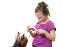 Photographing pet dog Royalty Free Stock Photography