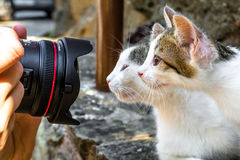 Photographing two cats Stock Photography