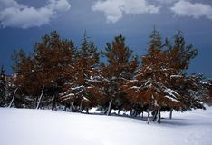 Photographing was carried out in the winter forest. Christmas and Christmas theme. - Image stock photography