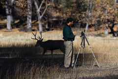 Photographing wildlife in Yosemite stock images
