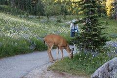 Photographing Wildlife Royalty Free Stock Photo