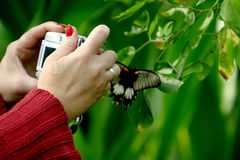 Photographing woman in the butterfly garden Royalty Free Stock Photo