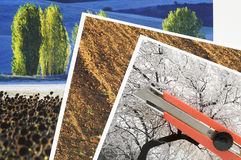 Photographs and cutter. Photographs printed on paper and cutter red Royalty Free Stock Photo