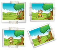Photographs and monkeys Royalty Free Stock Photos
