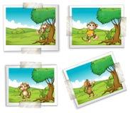Photographs and monkeys. Illustration of four photographs of monkeys vector illustration