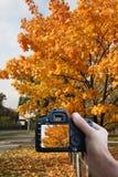 Photography autumn Stock Photos