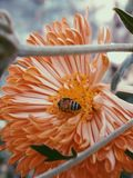 Photography of Bee On Flower Stock Photography