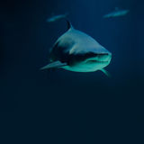 Photography big shark and fish silhouettes. Deep Royalty Free Stock Photography