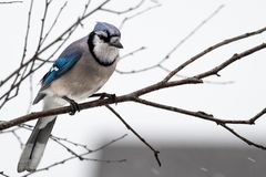 Photography of Blue and Gray Bird Royalty Free Stock Photography
