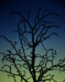 Photography of branch. On blue background Royalty Free Stock Images
