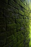 Photography of Bricks Covered with Moss Stock Image