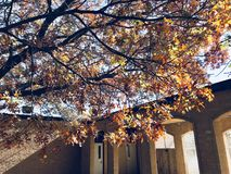 Photography of Brown Leaves Royalty Free Stock Photo