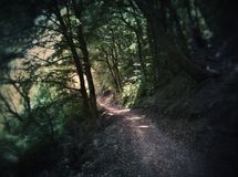 Photography of Dirt Road Surrounded by Trees Royalty Free Stock Images