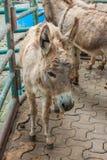 Donkey. Photography Donkey Farm Animals Mammal royalty free stock images