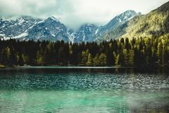 Photography of Fir Trees Near Lake Royalty Free Stock Photography