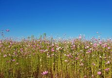Photography of Flowers Under Clear Sky Royalty Free Stock Images