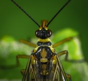 Photography Of Fly Stock Images