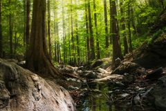 Photography of Forest During Daytime Royalty Free Stock Photos