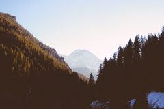 Photography of Forest Under Sunny Skies Royalty Free Stock Image