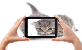 Photography funny kittens Stock Image