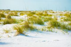 Photography of Grass on Sand Royalty Free Stock Photos