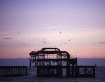 Photography image Brighton Pier beach at twilight sunset with birds flocking taken South coast England UK. A twilight evening in Brighton with starlings and Royalty Free Stock Image