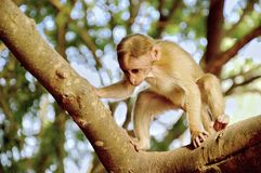 Photography of Monkey on Tree Royalty Free Stock Photos