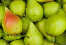 Late summer pears as background. Photography of multiple fresh picked late summer pears. The photography has been taken in natural daylight royalty free stock images
